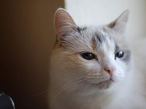 Про котиков... Маня. | Ярмарка Мастеров - ручная работа, handmade