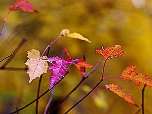 Осенняя палитра | Ярмарка Мастеров - ручная работа, handmade