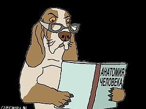 О собаках. | Ярмарка Мастеров - ручная работа, handmade