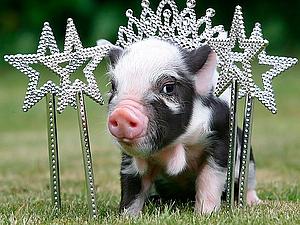 Миниатюрные свинки | Ярмарка Мастеров - ручная работа, handmade