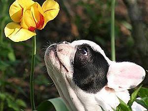 Фотографии собак или позитив в чистом виде :) | Ярмарка Мастеров - ручная работа, handmade