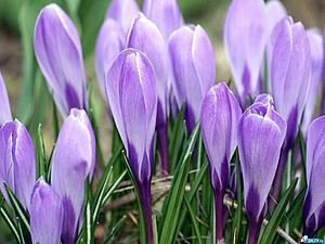 Ну вот и весна!!! | Ярмарка Мастеров - ручная работа, handmade