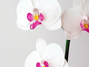 "Мастер-класс ""Орхидея фаленопсис"" 2 и 9 августа - Ярмарка Мастеров - ручная работа, handmade"