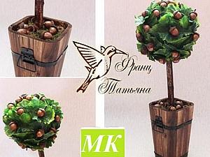 МК - Желудевое дерево или