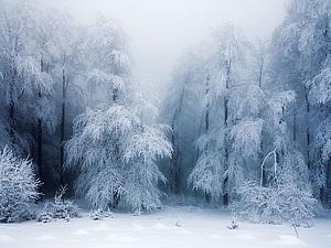 ... Завораживающие зимние пейзажи ... Источники Вдохновения ... | Ярмарка Мастеров - ручная работа, handmade