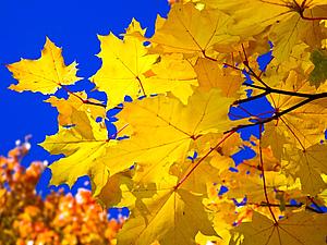 Осень в дизайне интерьера: осенний декор дома. Вдохновение и идеи! | Ярмарка Мастеров - ручная работа, handmade