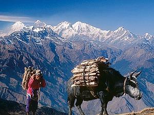 World Wood Day 2016: Мировой день древесины в Непале. Часть 2. Ярмарка Мастеров - ручная работа, handmade.
