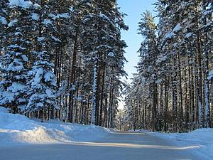 Северный лес   Ярмарка Мастеров - ручная работа, handmade
