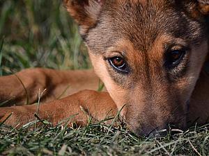 Собачка Гайка ищет дом   Ярмарка Мастеров - ручная работа, handmade