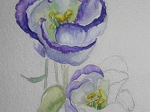 Эустомы цветы