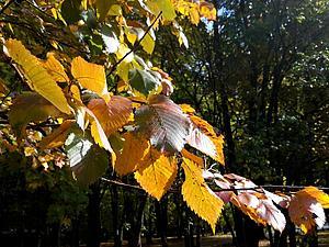 Осень, что нас вдохновляет. | Ярмарка Мастеров - ручная работа, handmade