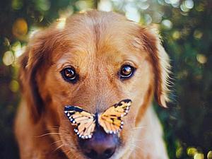 15 вещей, которым вас научат собаки | Ярмарка Мастеров - ручная работа, handmade
