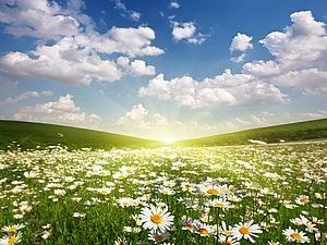 И цветы,и трава ,и колосья....Бунин | Ярмарка Мастеров - ручная работа, handmade