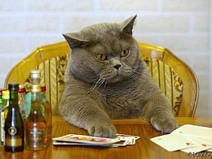 А ты поздравил своего кота? | Ярмарка Мастеров - ручная работа, handmade