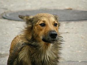 Собака... | Ярмарка Мастеров - ручная работа, handmade