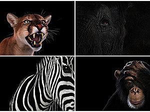 Портреты крупным планом ... Источники Вдохновения ... | Ярмарка Мастеров - ручная работа, handmade