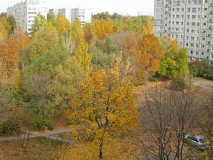 Осень в моём окне. | Ярмарка Мастеров - ручная работа, handmade