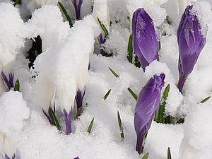 С праздником Весны, женственности, красоты и пробуждения! | Ярмарка Мастеров - ручная работа, handmade