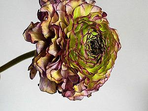 Жизнь цветов | Ярмарка Мастеров - ручная работа, handmade