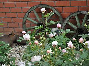 В зарослях роз! | Ярмарка Мастеров - ручная работа, handmade