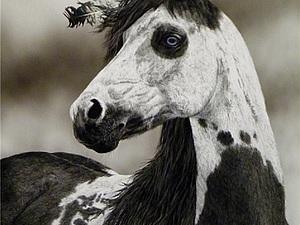 Боевой конь индейца. Ярмарка Мастеров - ручная работа, handmade.