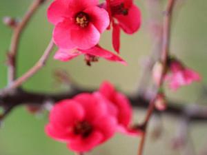Я отправляю вам Весну...(фото, свежие фото)   Ярмарка Мастеров - ручная работа, handmade