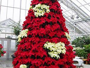 Пуансеттия -Рождественская звезда | Ярмарка Мастеров - ручная работа, handmade