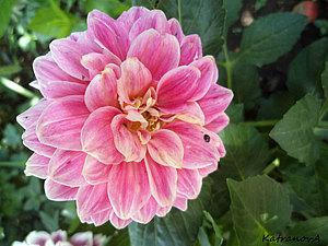 Про цветы | Ярмарка Мастеров - ручная работа, handmade