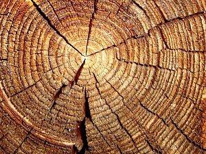 Полезные свойства древесины. Ярмарка Мастеров - ручная работа, handmade.