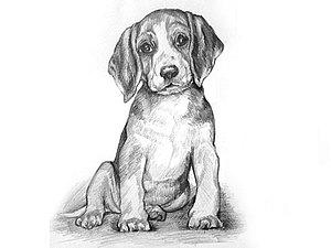 Видео мастер-класс: рисуем щенка карандашом. Ярмарка Мастеров - ручная работа, handmade.
