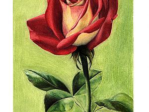 Как нарисовать розу пастелью. Ярмарка Мастеров - ручная работа, handmade.