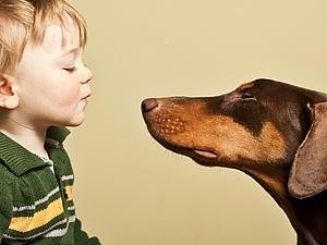 Почему детям нужны домашние животные? | Ярмарка Мастеров - ручная работа, handmade