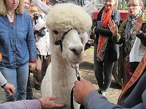 Поездка на ферму альпак в Германии | Ярмарка Мастеров - ручная работа, handmade