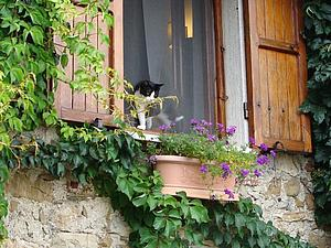 Требиано - средевековое чудо. Город котов.   Ярмарка Мастеров - ручная работа, handmade