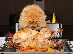 Гарфи - самый сердитый котик на планете! | Ярмарка Мастеров - ручная работа, handmade