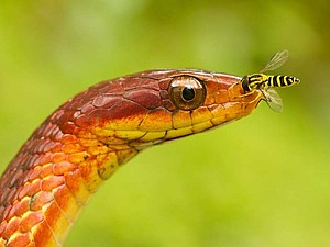 ...Восхитительность Змей (особо впечатлительных просьба не смотреть ) ... | Ярмарка Мастеров - ручная работа, handmade