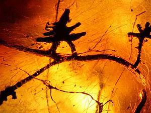 Янтарь — волшебные слезы леса. Ярмарка Мастеров - ручная работа, handmade.