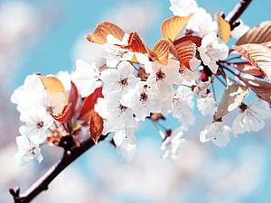 Дети - цветы жизни! У нас день рождения - у Вас скидка! | Ярмарка Мастеров - ручная работа, handmade