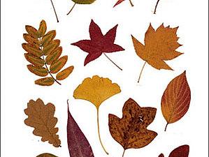 Куплю засушенные листья (гербарий) | Ярмарка Мастеров - ручная работа, handmade