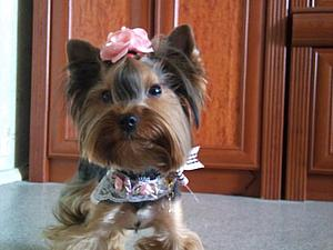 Про одежду, собачек, девочек... просто для хорошего настроения!   Ярмарка Мастеров - ручная работа, handmade
