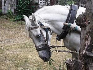 Почему я не шью лошадок | Ярмарка Мастеров - ручная работа, handmade