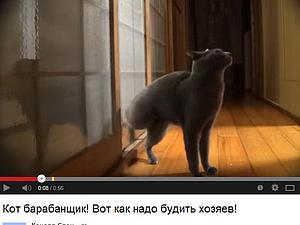 Смешное видео про кота нашла :))) | Ярмарка Мастеров - ручная работа, handmade