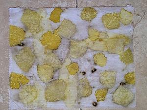 Образцы с домашними растениями (не комнатными)) | Ярмарка Мастеров - ручная работа, handmade