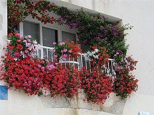 Сад на балконе | Ярмарка Мастеров - ручная работа, handmade