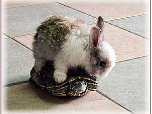 Черепаха Сусами | Ярмарка Мастеров - ручная работа, handmade