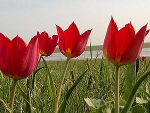 Степь цветёт | Ярмарка Мастеров - ручная работа, handmade