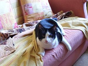 И снова про котэ | Ярмарка Мастеров - ручная работа, handmade