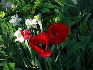 Весна в моем саду | Ярмарка Мастеров - ручная работа, handmade