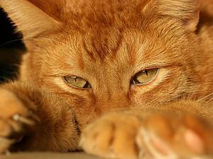 Рыжая кошка - осень   Ярмарка Мастеров - ручная работа, handmade