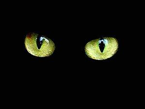Простая обработка темных фотографий. Ярмарка Мастеров - ручная работа, handmade.